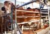 Bom momento para o leite em MS: Mercado em alta