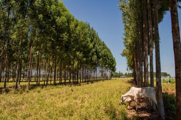 Fórum sobre monitoramento de carbono na agropecuária será realizado na sede do Sistema Famasul